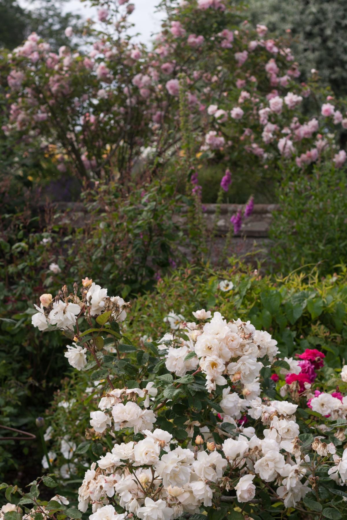 Tyninghame Gardens: a summertrip