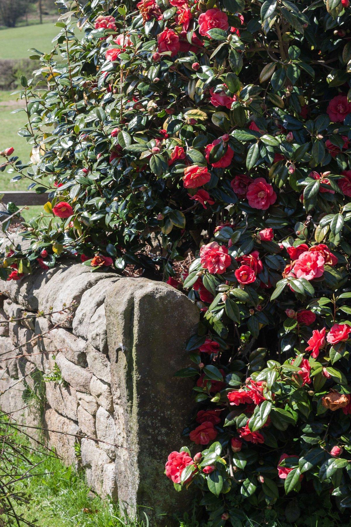 Sunshine and gardening inDerbyshire