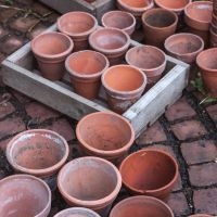 A post about pots — Edinburgh Garden Diary