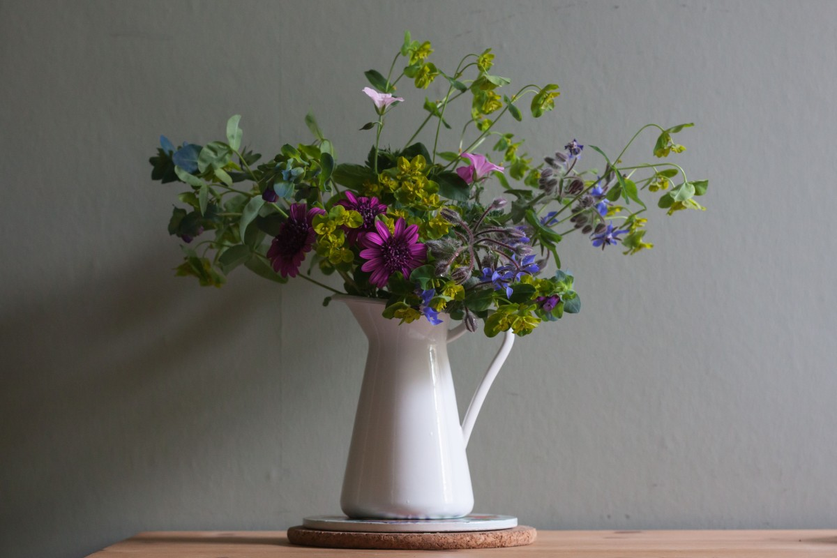 Summer stalwarts: a few flowers I can't live without