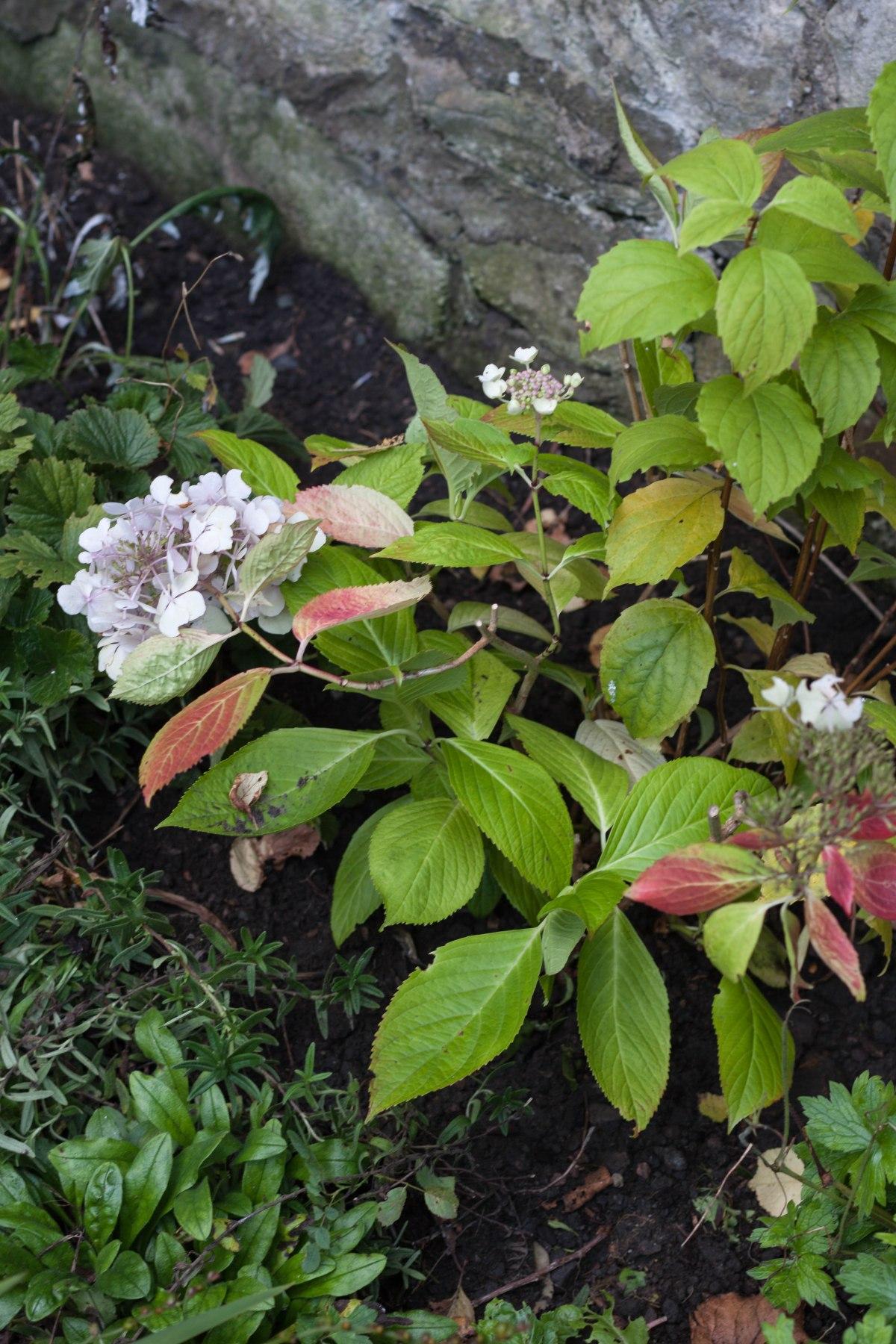 An autumn gardenreshuffle